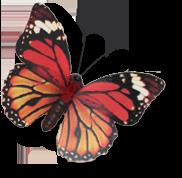 Vítejte v kosmetickém a masážním salonu motýlek